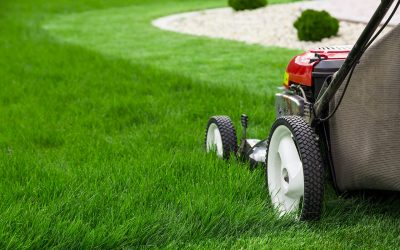 5 Tips for Spring Lawn Care