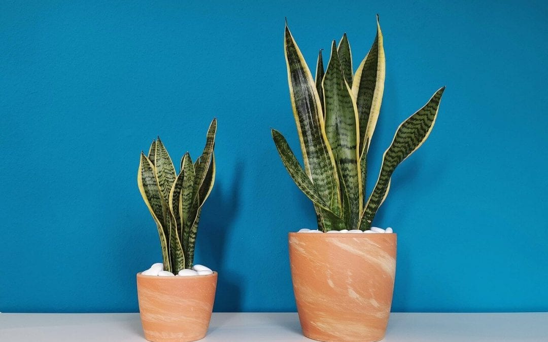 houseplants are helpful for improving air quality